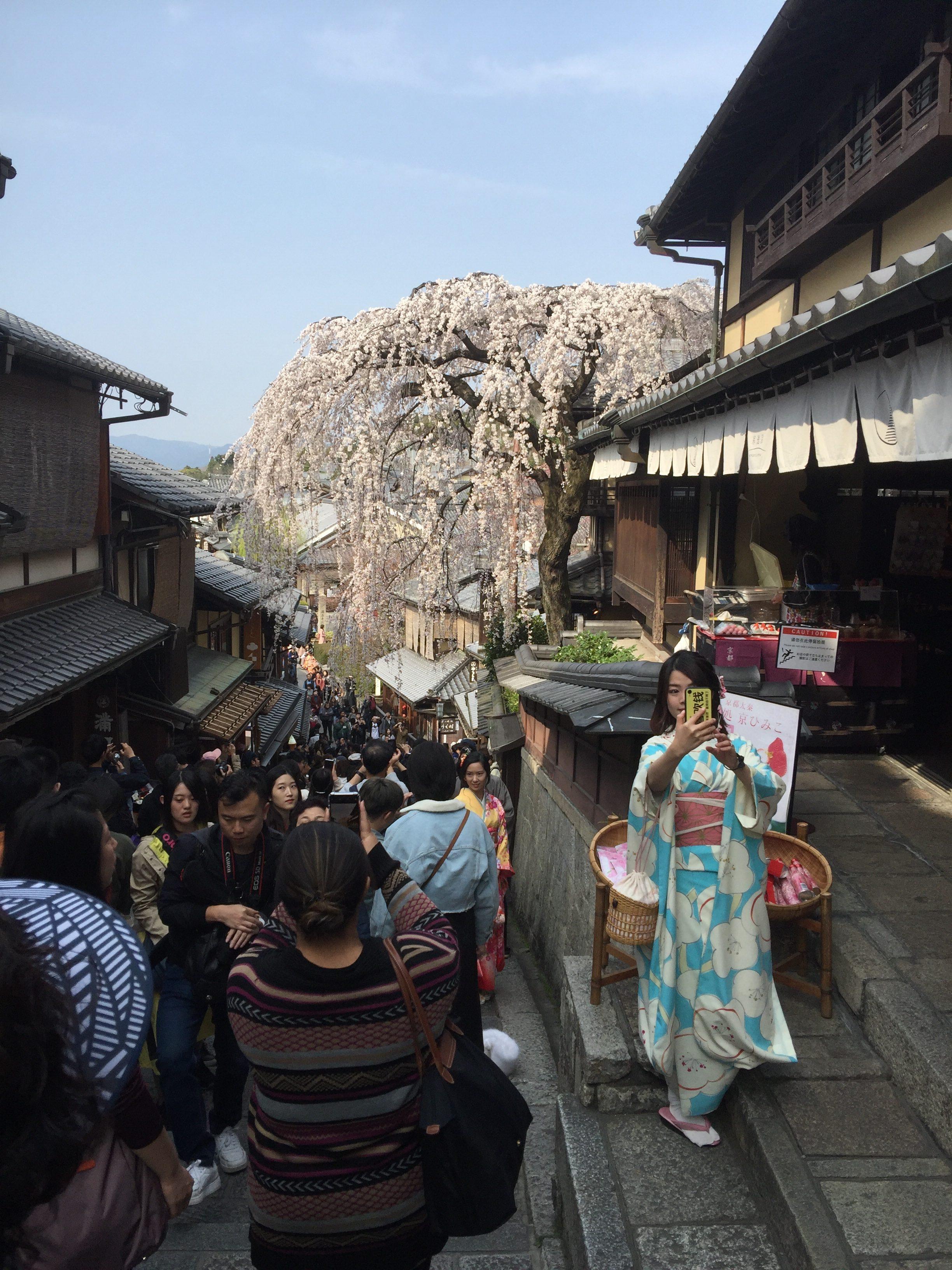 清水寺は世界遺産だけに外国人がレンタル着物で散策し日本融合